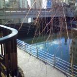 『川の畔に』の画像
