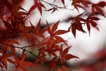 吉野の紅葉