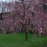 『2003年 4月26日 花見:弘前市・弘前公園』の画像