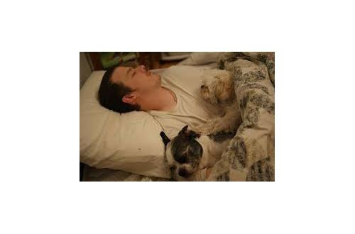 🐊イッヌと一緒に眠る喜びを知ってる奴wwwwwwwのサムネイル画像