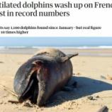 『フランス大西洋沿岸で起きているイルカの大量殺害』の画像