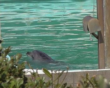 【犬吠埼マリンパーク閉館】イルカのハニーの現在・・・