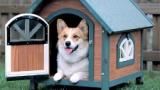 庭で飼われてる犬ってこの時期大丈夫なの?