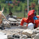 『行方不明者捜索の頼もしい味方「災害救助犬」』の画像