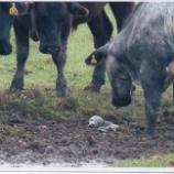 『牧場で発見されたアザラシの赤ちゃん』の画像