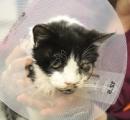 【画像】愛猫が車に轢き殺されて自宅の庭に埋葬→5日後、そこには墓から這い出て庭を歩き回る愛猫の姿が