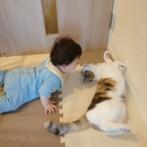 【GIF】ニャンカスさん、人間の赤ん坊を襲う!!!