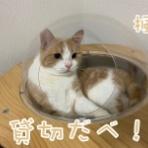 cat cafe Prince
