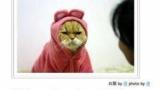 なぜ猫は干支からハブられているのか