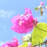 『真夏の沖縄(6)TK氏追悼』の画像