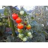 『夏の野菜たち』の画像