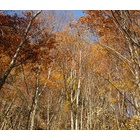 『落葉の季節』の画像