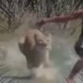 【閲覧注意?】 でっかいネコが襲ってきた。男が全力で逃げる。うわぁあぁ!! → こうなりました…
