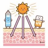 『【クリップアート】紫外線対策・日焼け止めのイラスト2(皮膚のイメージ・スキンケア・赤ちゃん、老人の日焼け止め対策)』の画像