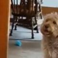 【イヌ】 パパが子供を「たかいたかい」する。でっかい犬がそれを見ていた → こうなる…