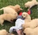 2歳くらいの男の子が獣10匹に襲われる動画