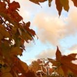 『11月26日(火)』の画像