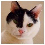 『【癒し&インテリアの参考に♥】オシャレに猫と暮らすInstagram(インスタグラム)アカウント7選 【インテリアまとめ・インテリアデザイナーとは 】』の画像