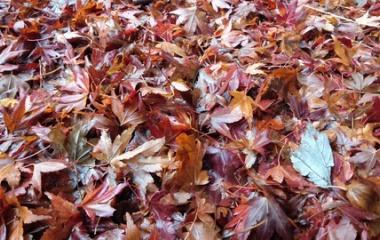 『【植物】濡れ落ち葉【写真あり】』の画像