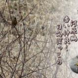 『日向ぼっこ』の画像
