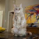 『二本足で立つ動物たち』の画像