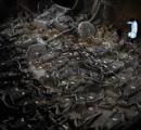 副葬の馬が整然と… 中国・河南省で2400年以上前の「車馬坑」発見