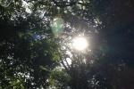 森に変化が!?まだまだ暑いけど交野の森で小さい秋見つけた!~交野の森暮らし~