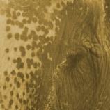 『砂の象:美しいサンドアート』の画像