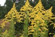 【怒り】花粉って日本中で苦しんでるのになんの対策もしないの?