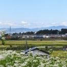 9月11日撮影 ソバの花と中央東線貨物2083レ