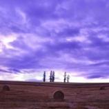 『【北海道ひとり旅】上川の旅『マイルドセブンの丘』夕暮れの情景 2019』の画像