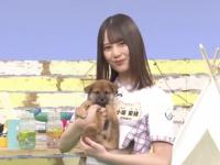 【日向坂46】本日どうぶつピース2時間半SP!!こさかなも登場!!!!!