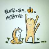 『🕷️我が家の猫の問題行動🐞』の画像