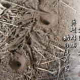 『蟻地獄』の画像
