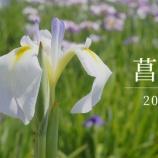 『【動画】 2018年 小岩菖蒲園 RX1』の画像