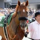 『スマートオリオンが押し切り重賞2勝目/中京記念(GⅢ)』の画像