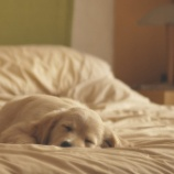 『眠る仔犬たち』の画像