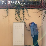 『【乃木坂46】この人、白石麻衣卒業にショックを受けてしまう・・・『ま、まいやん。。泣くな、笑うんだ・・・』』の画像