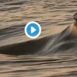 『Wow! 美しい波!』の画像