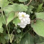 うさぎたちと野咲百合花(のさきゆりか)の閑かな暮らし