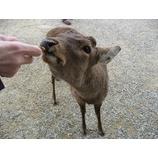 『鹿に囲まれて、ウンがつく!』の画像