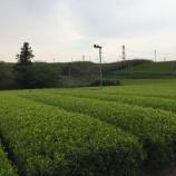 『静岡と言えばやっぱりお茶ということで新茶を買ってみた』の画像