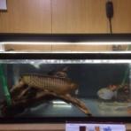 新着!お魚さんの掲示板。
