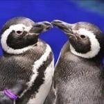 ペンギンって普通の家で頑張れば飼えるの?