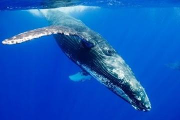 海洋生物の強さ格付 ランキング