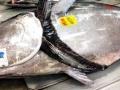 松方弘樹のクロマグロ(300kg超)の落札金額wwwwww