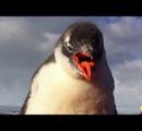 【急募】郵便局員募集 月給:20万円 水道:なし 電話:なし ネット:なし 勤務地:南極 ペンギンつき