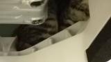猫が洗濯機からでてこないんだがwww(※画像あり)