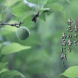 『秀花の香り』の画像