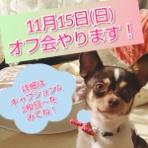 Go forward! forわんDog